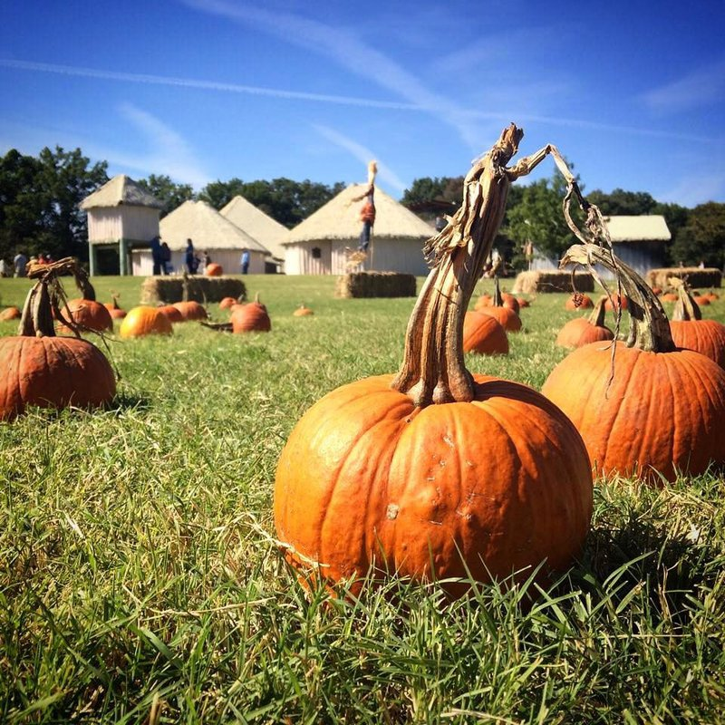 Pumpkins in a field at the Chickasaw Cultural Center in Southern Oklahoma