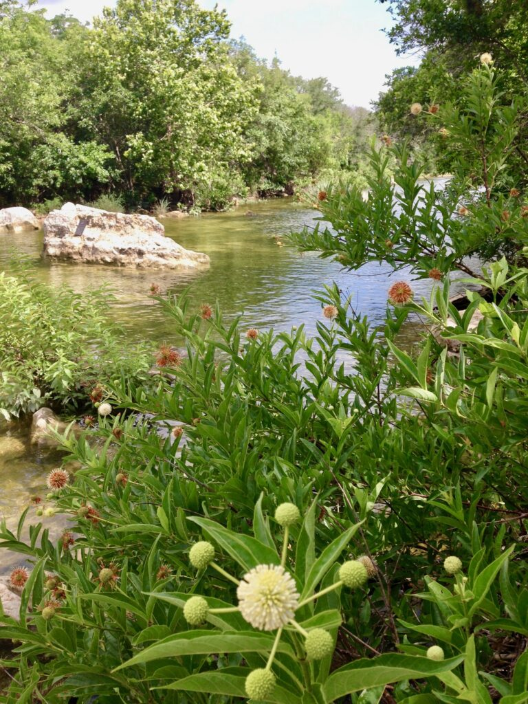 Barton Creek Greenbelt, one of the best things to do in Austin with kids