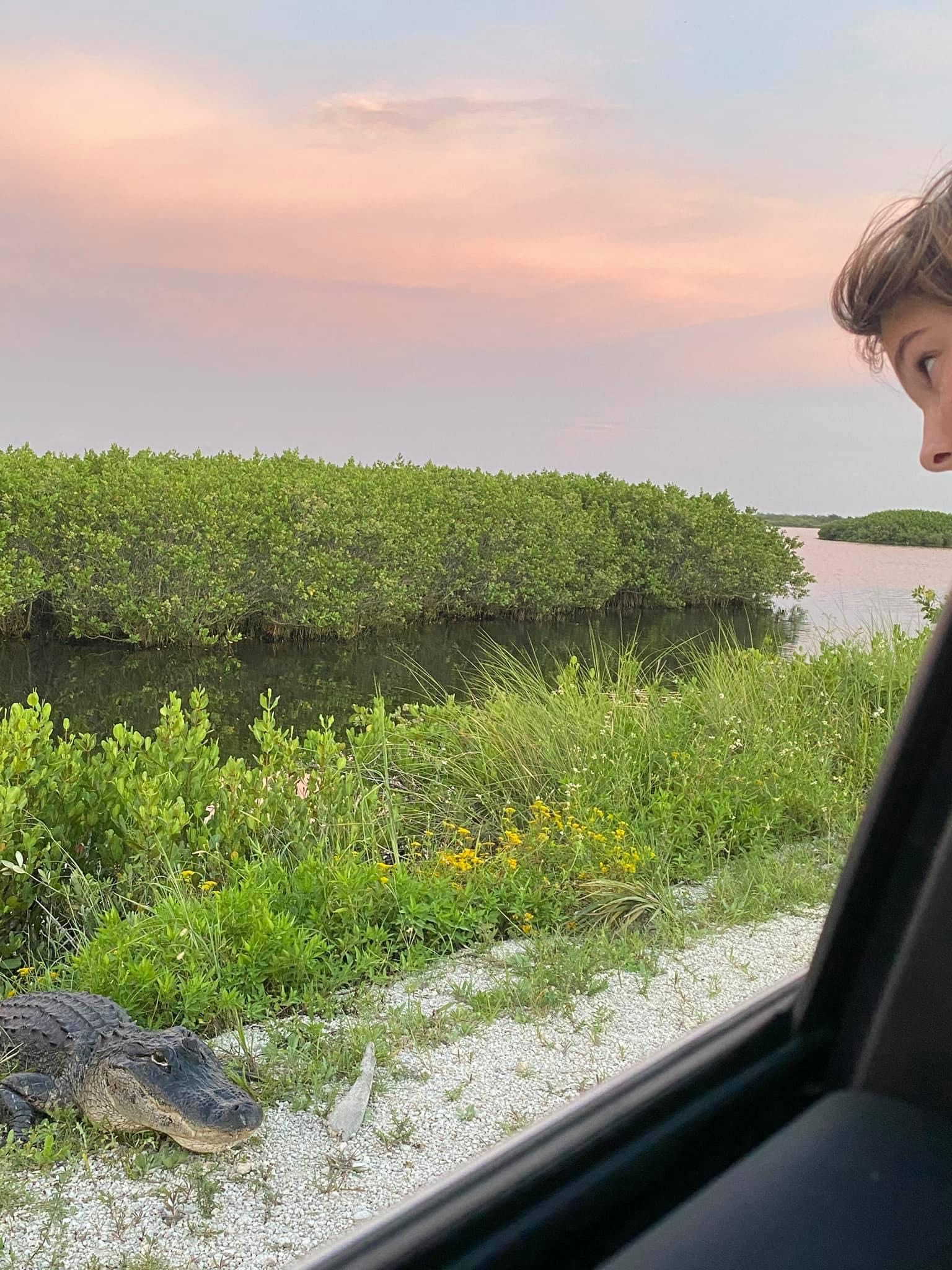 child looking out of a car window at an alligator