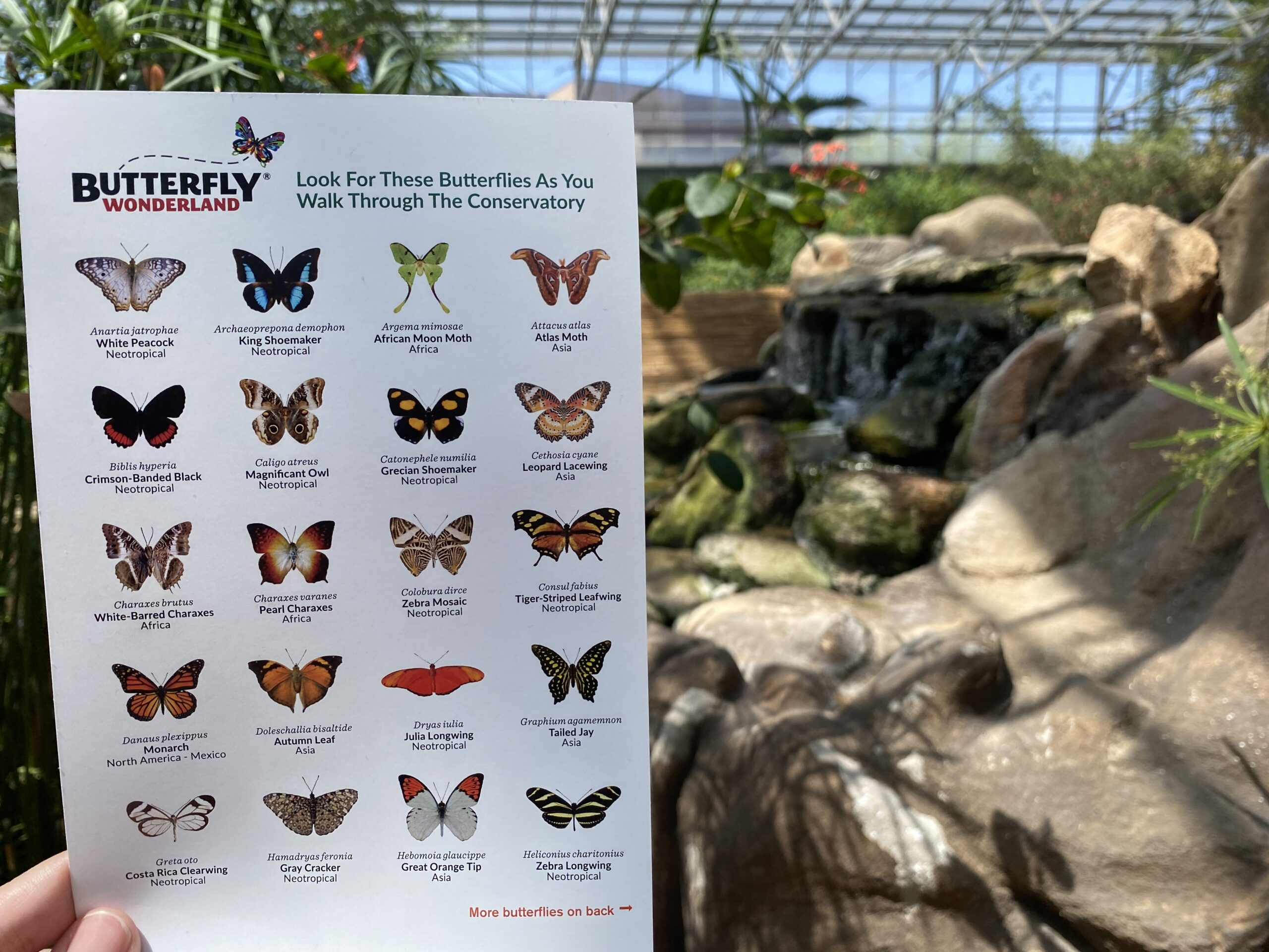 Looking for butterflies in the Butterfly Conservatory at Butterfly Wonderland in Scottsdale