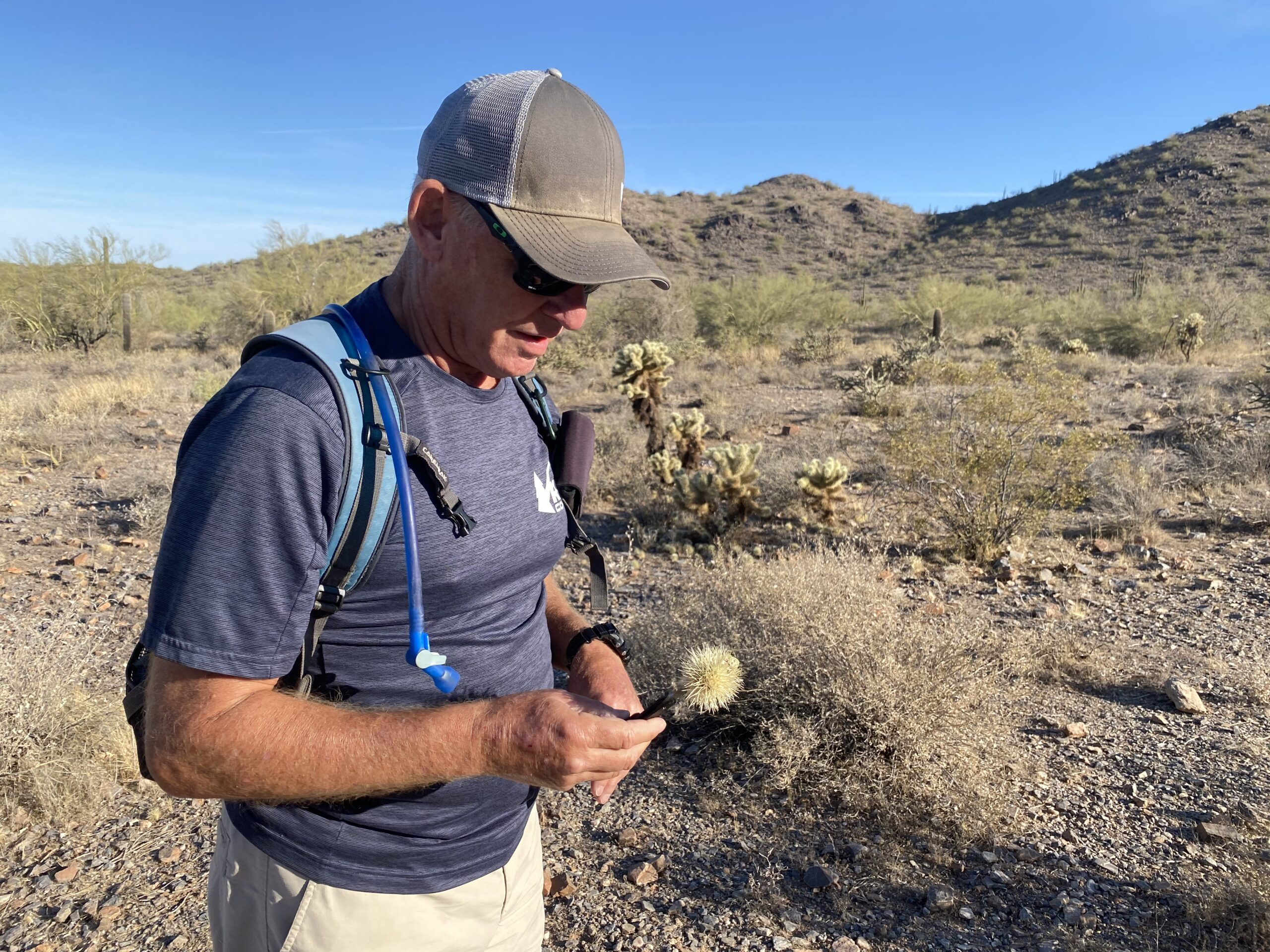 Jumping cholla in the McDowell Sonoran Preserve