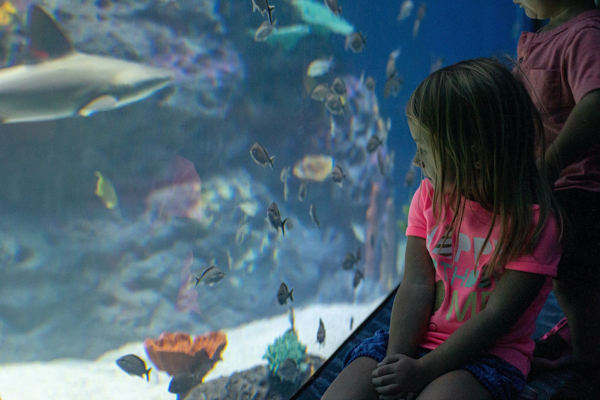 Fun with kids in Biloxi leads to the newest attraction, the Mississippi Aquarium.