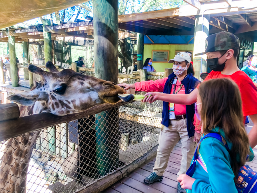 People feeding a giraffe at the Brevard County Zoo, one of the best zoos to visit in the US