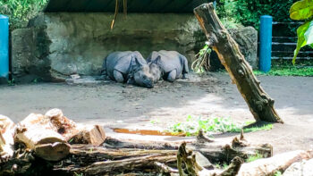 best zoos in the usa woodland park zoo rhinos