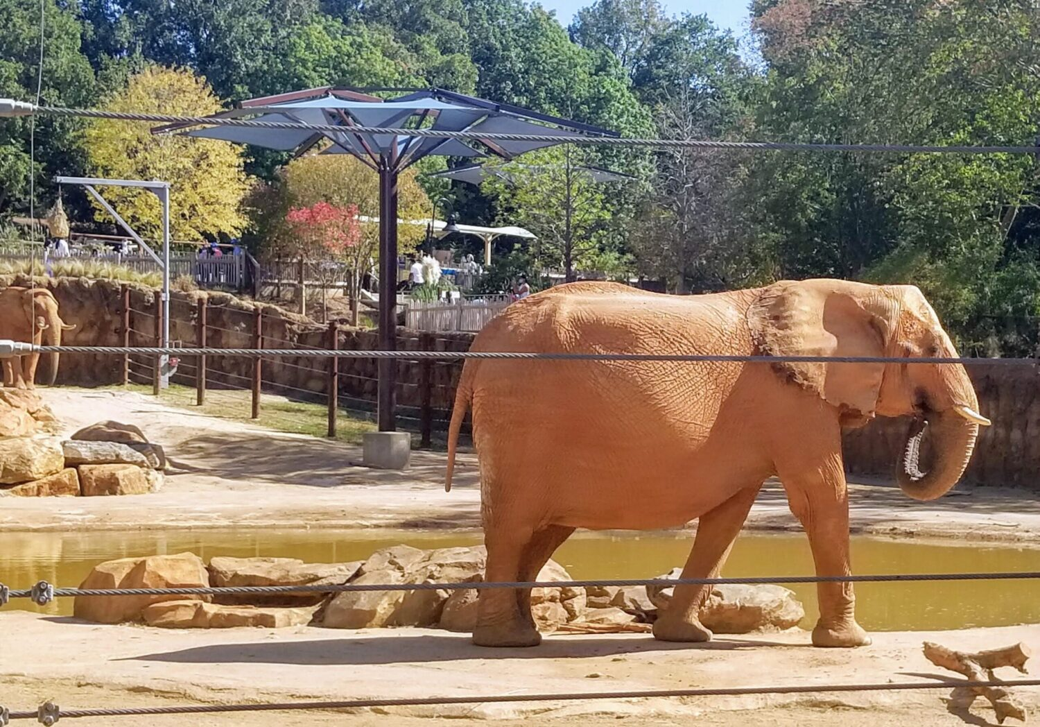 An elephant at Zoo Atlanta, one of the best things to do in Atlanta with kids