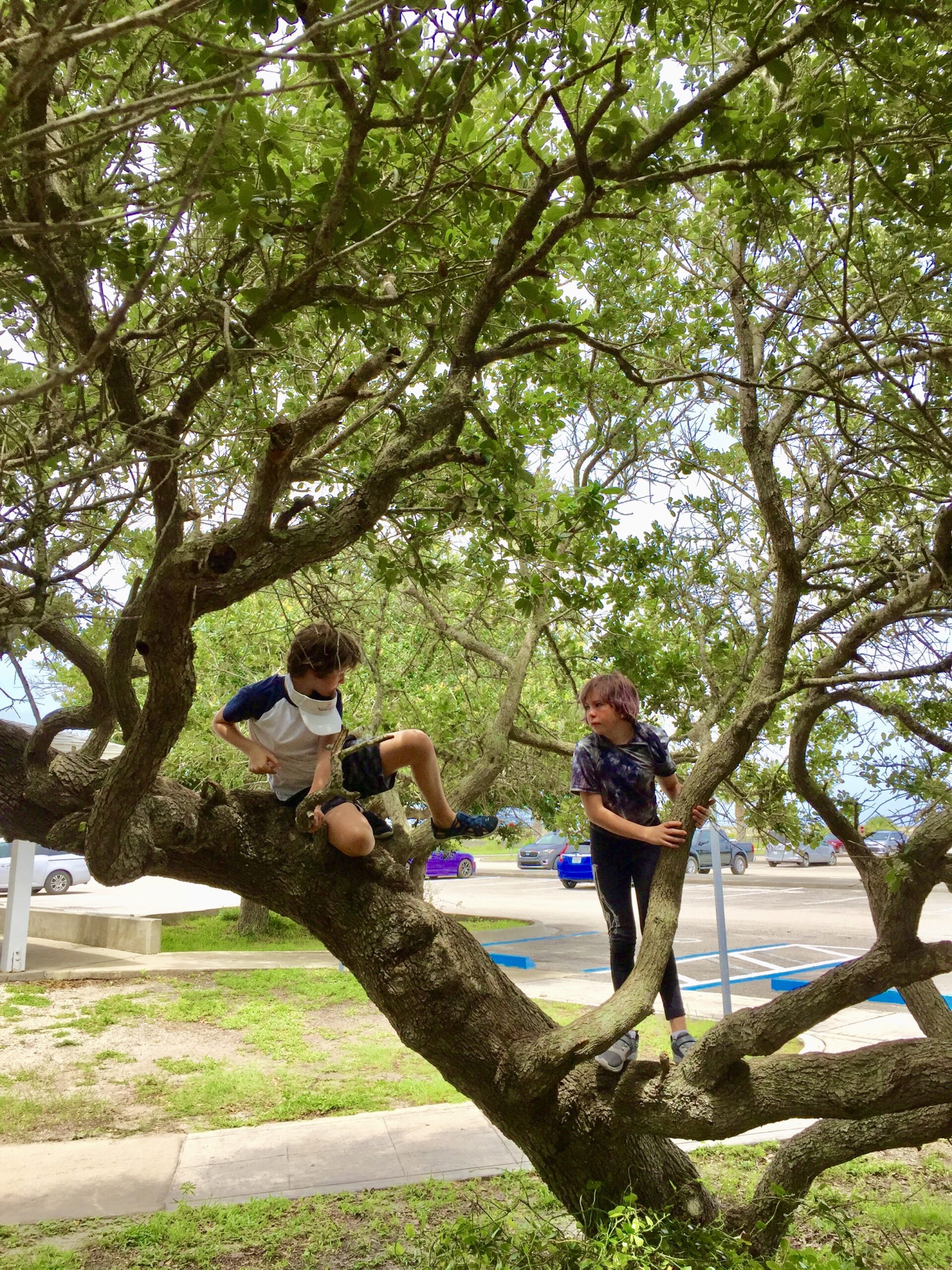 St. Augustine beaches even include nearby trees of many branches.