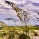 dunes and sea oats St. Augustine Beach