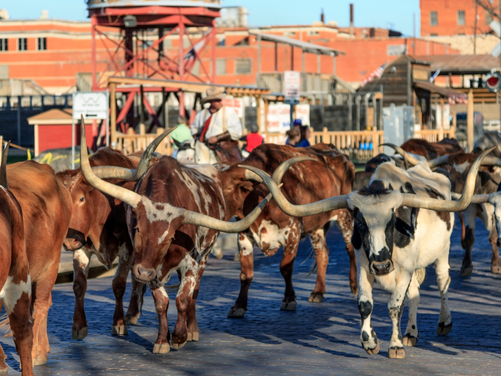 the stockyard in Forth Worth, Texas