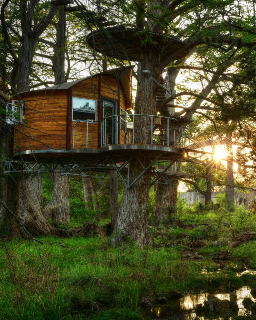 Tree House in the Cypress Trees