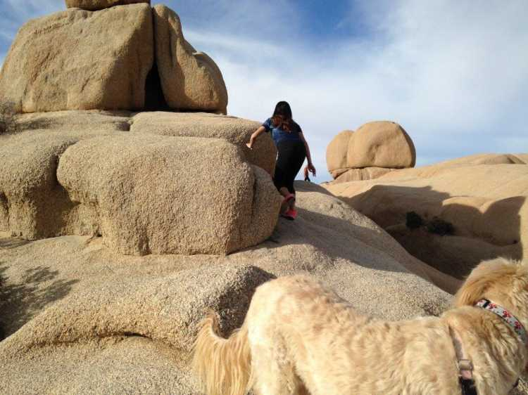 Person climbing a rock in Joshua Tree National Park, a fun thing to do in the fall in California