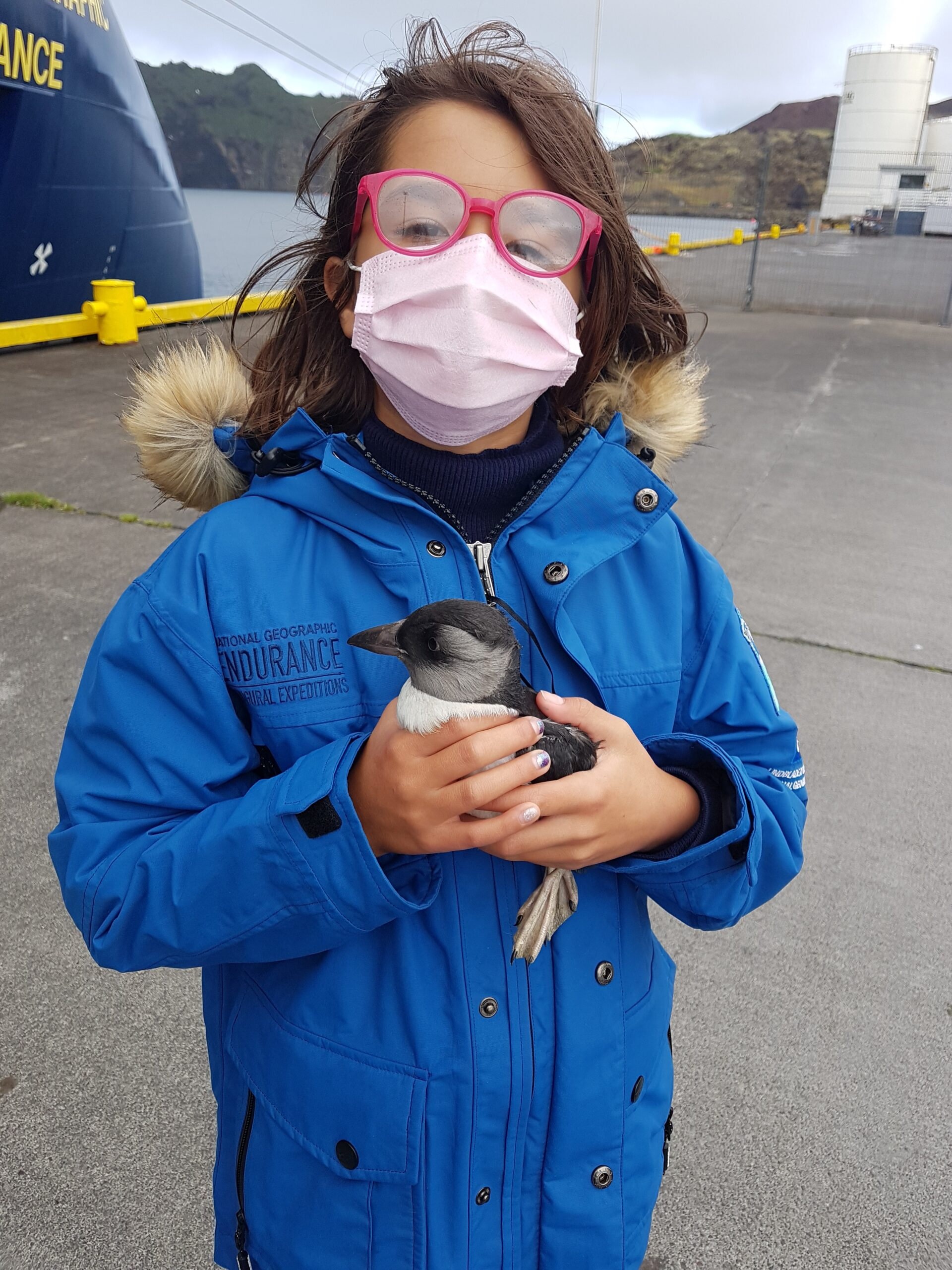 Lindblad cruise: holding a puffling