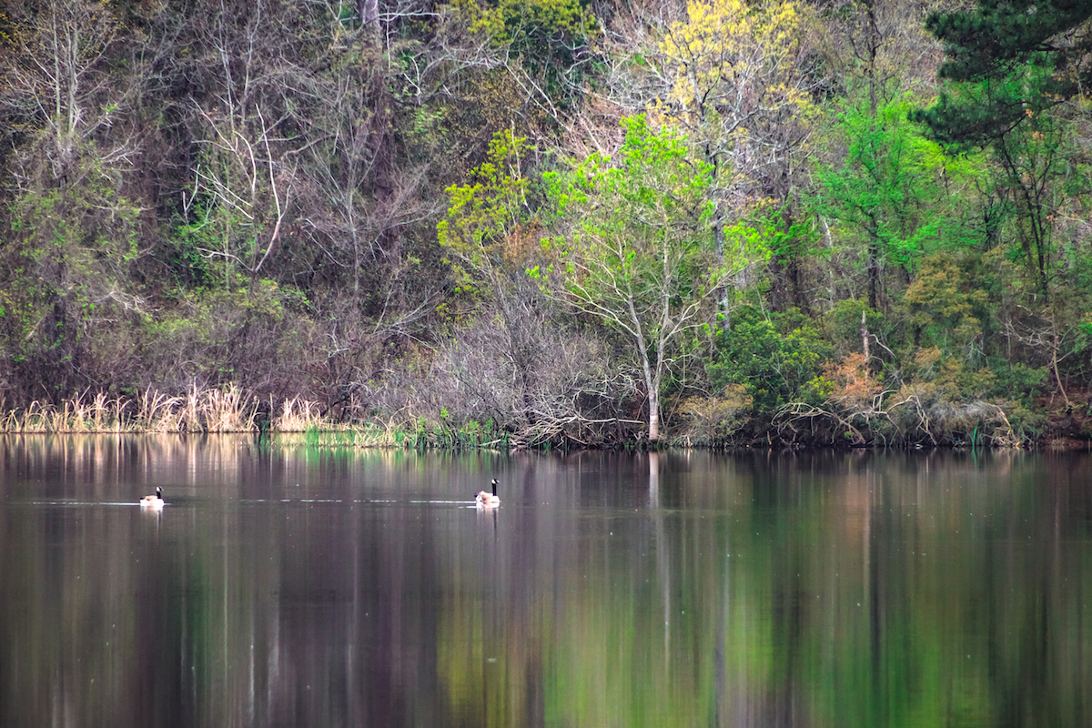 Tyler State Park fall in Texas