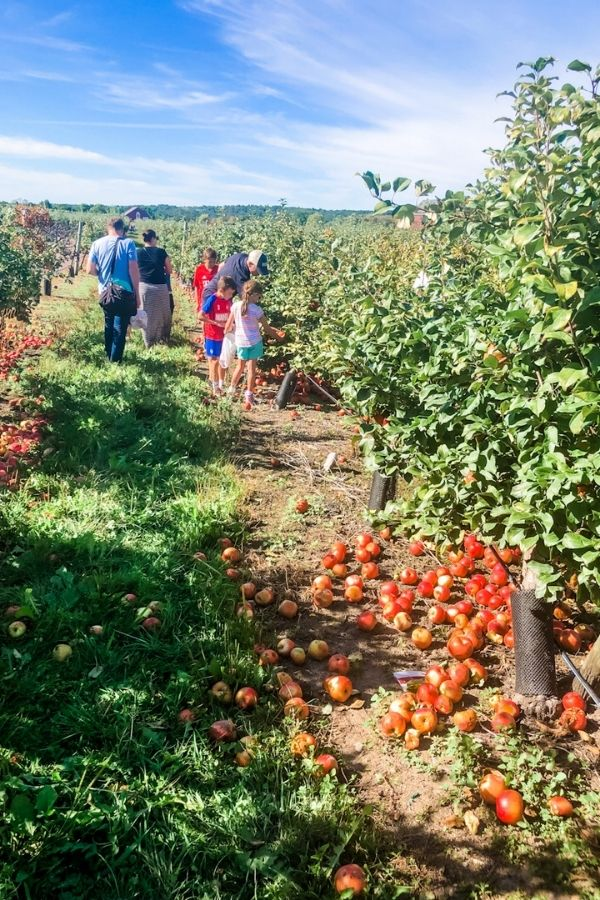 Family walking through an apple orchard