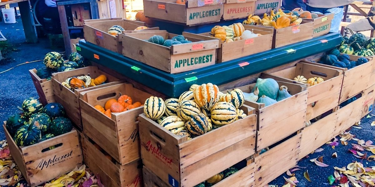 Boxes of gourds at an apple orchard