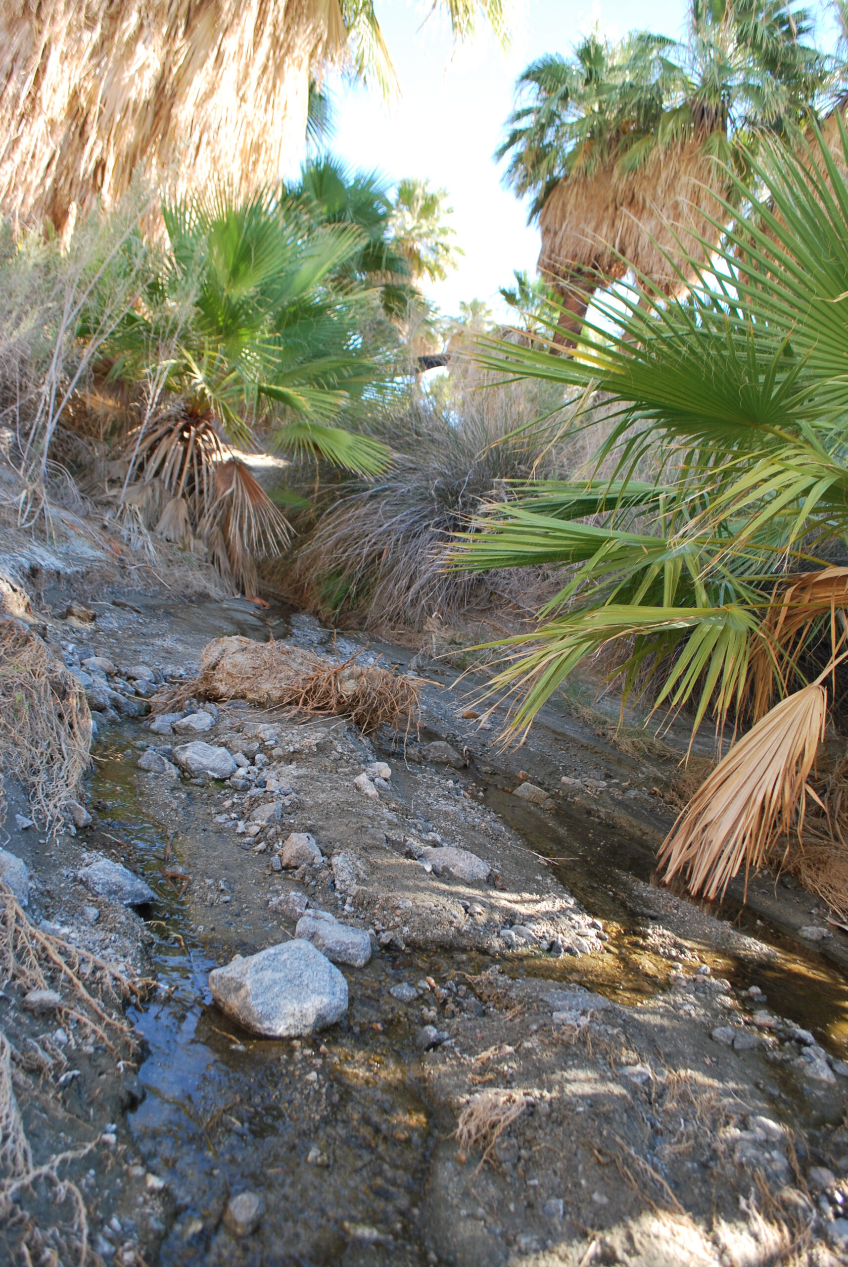 Aquifer near Palm Springs, something to see on a jeep tour in California in the fall