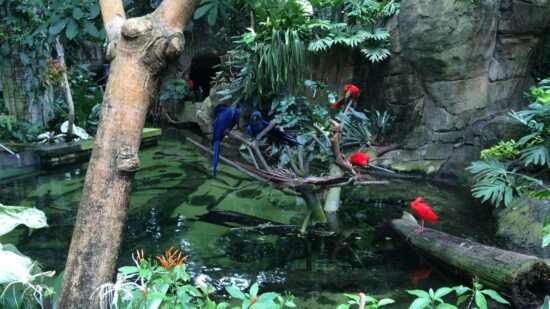 Moody Gardens in Galveston, Texas is fun for the whole family