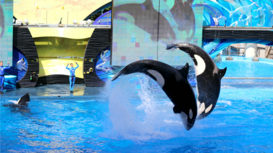 You'll be surprised at how much there is to do when visiting Sea World Orlando