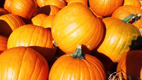 Pumpkin patches are some of the best fall activities for families in the US.