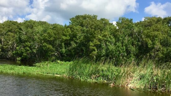 Old Florida can be found near DeLand in rustic waters like the St. Johns River.