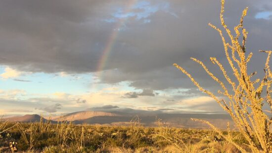 We were lucky to see a rainbow while touring Big Bend National Park. Rainy season lasts from June to late October in the park