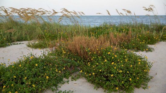are the beaches one of the best things to do at Sea Island