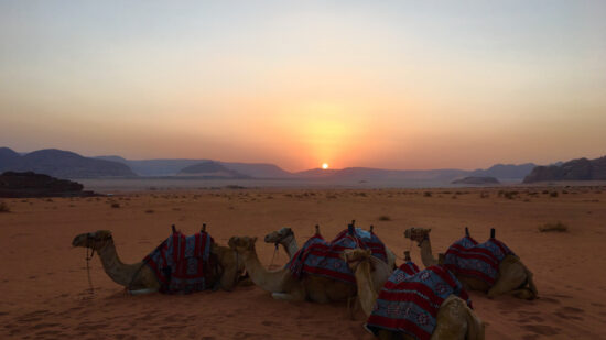 Take a camel ride. Things to do with kids in Wadi Rum.