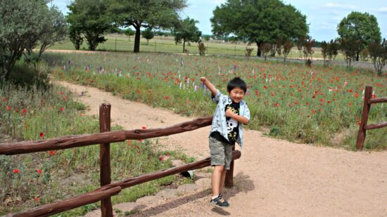 Wildseed Farms is one of the things to do in Fredericksburg Texas with kids