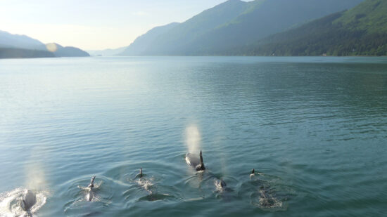 Seeing orca whales headed out to see with Uncruise Alaska.