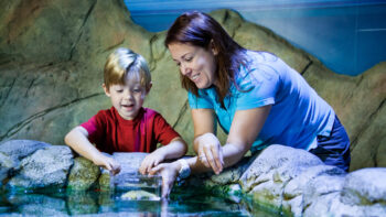 Mom and son at the touch tank at SEA LIFE Grapevine Aquarium