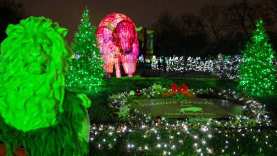 Midwest Christmas lights at Brookfield Zoo.