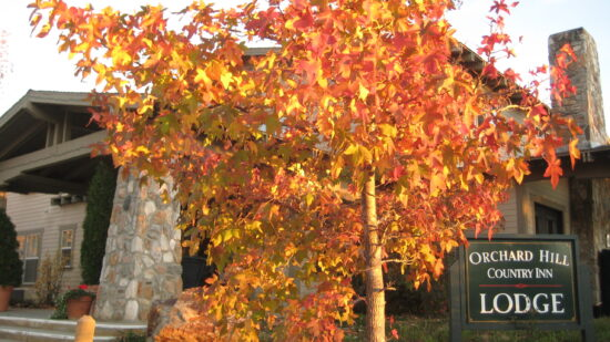 tree with fall foliage in front of an inn sign in Julian CA