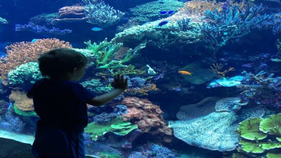 VIP Tips for SeaWorld Orlando with Kids