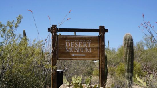 Things to do with kids in Tucson: Spend a Day at the Arizona-Sonora Desert Museum. Photo by Multidimensional TravelingMom, Kristi Mehes.