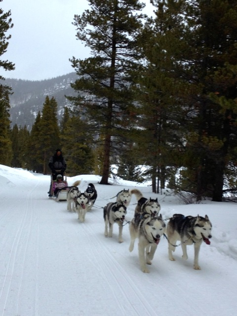 Good Times Adventures dog sledding tours