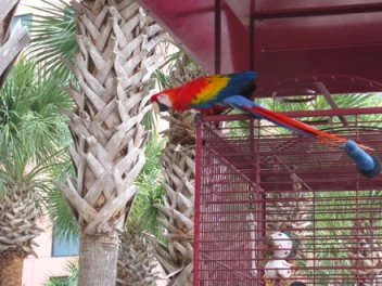 caribe royale parrot