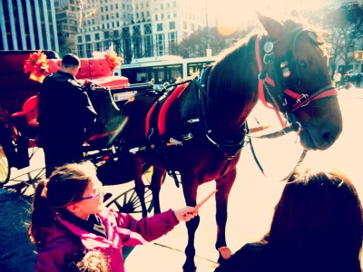 carriage ride in central park NYC