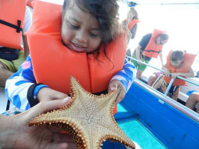 starfish shrunk