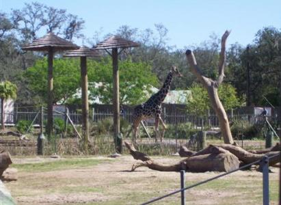 Lowry Park Zoo, Tampa Bay, Florida