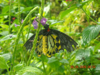 Butterfly_Ft._Lauderdale_200