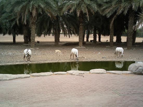 arabian-wildlife-center