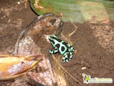 frog-costa-rica-travel