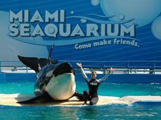 miami for families our top 5 attractions traveling mom