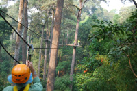 Jungle_Flight